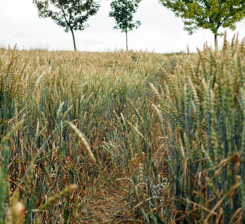 Działaka, polana, łąki